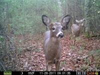 deer-10