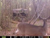 deer-13
