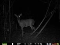 deer-14