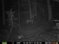 deer-15