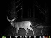 deer-16